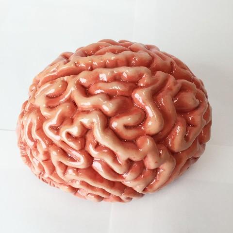「脳みそ」の画像検索結果