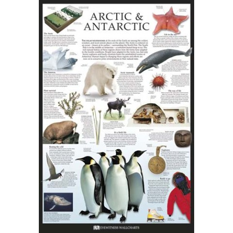 【ポスター】ARCTIC & ANTARCTIC /Dorling Kindersley